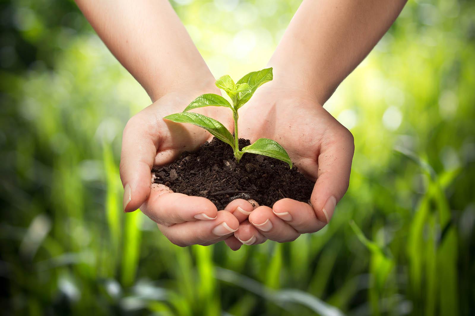 nuôi trồng tự nhiên