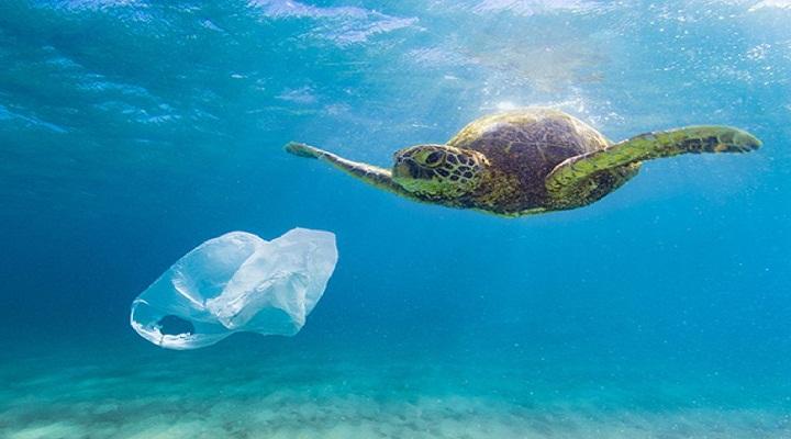 rác thải đại dương