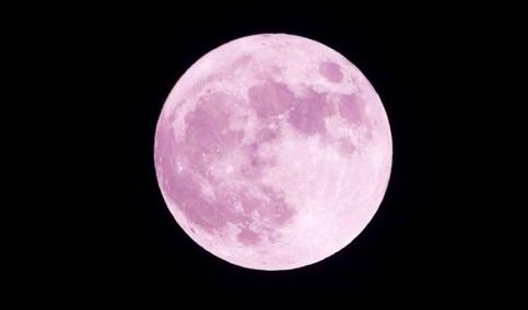 trăng dâu tây