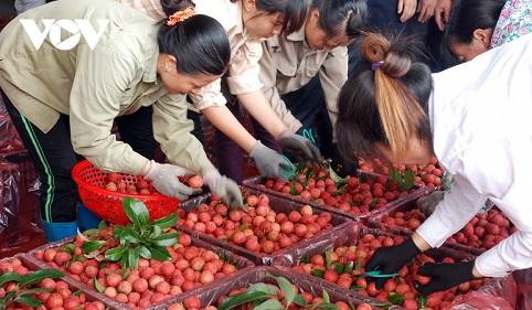 Cơ hội cho nông sản Việt Nam vào châu Âu sau khi EVFTA có hiệu lực.