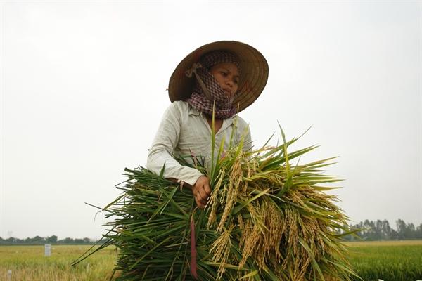Những mặt hàng thuộc nhóm nông sản như, gạo, cà phê, thủy sản, trái cây…vẫn đang xuất khẩu nhiều sang thị trường châu Âu sau khi EVFTA có hiệu lực. Ảnh: Qúy Hòa