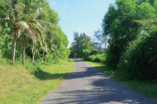 Đường đi rợp bóng cây ở đảo