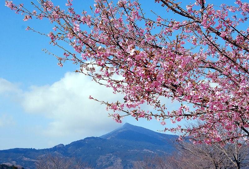 Các công ty trả thuế thay cho khách khi du lịch Nhật