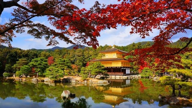 Chùa Kinkaku mùa thu - Ảnh: Kikou