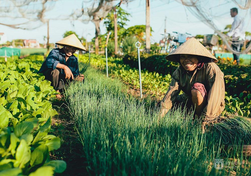 làng rau trà quế