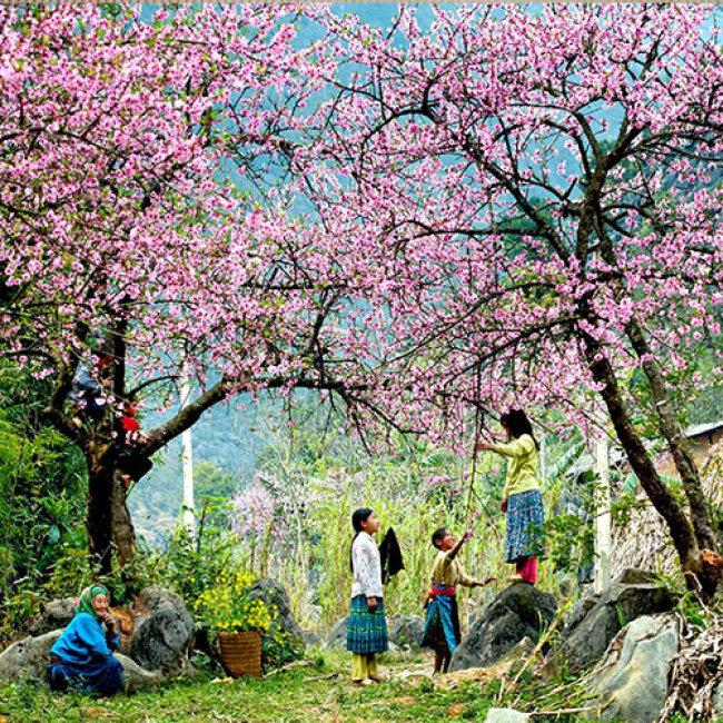 Mai Châu rực rỡ trong sắc đào mùa Xuân