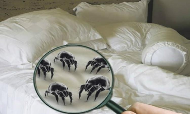 vi khuẩn giường ngủ