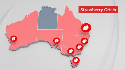 """Những bang và vùng lãnh thổ ở Australia bị ảnh hưởng bởi """"cuộc khủng hoảng kim khâu"""". Nguồn: SBS News"""