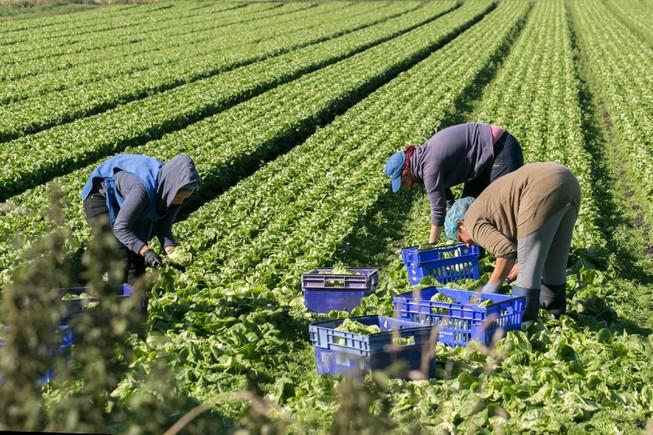 lao động nhập cư