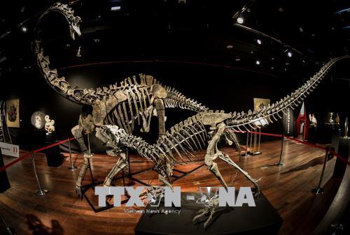 xương khủng long