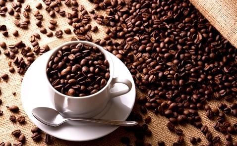 Giá cà phê thế giới 12 tháng qua