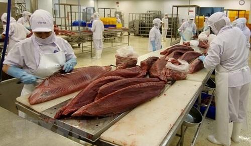 cá ngừ xuất khẩu