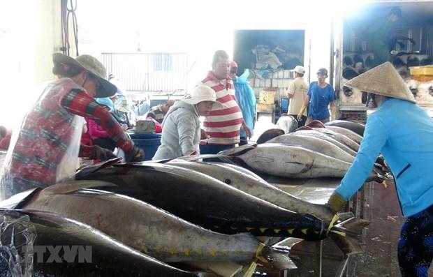 cá ngừ đóng hộp