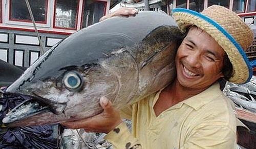 xuất khẩu cá ngừ