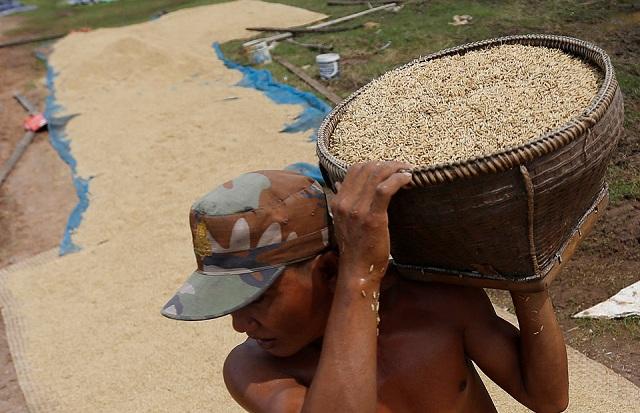 giá gạo việt nam