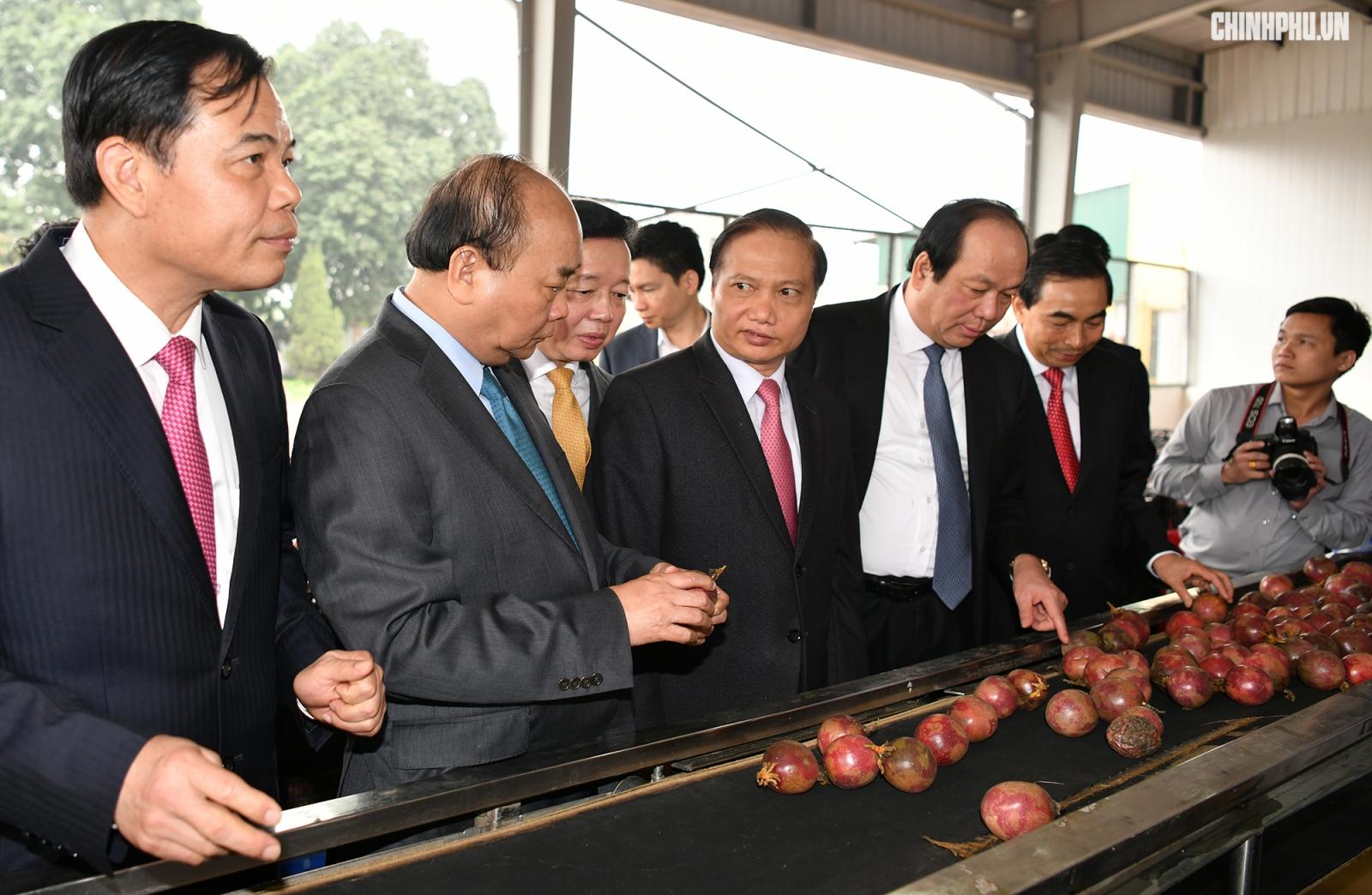 Thủ tướng thăm dây chuyền phân loại và đóng gói chanh leo - Ảnh: VGP/Quang Hiếu.