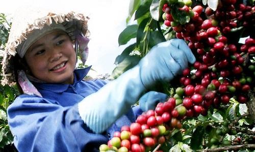xuất khẩu cà phê