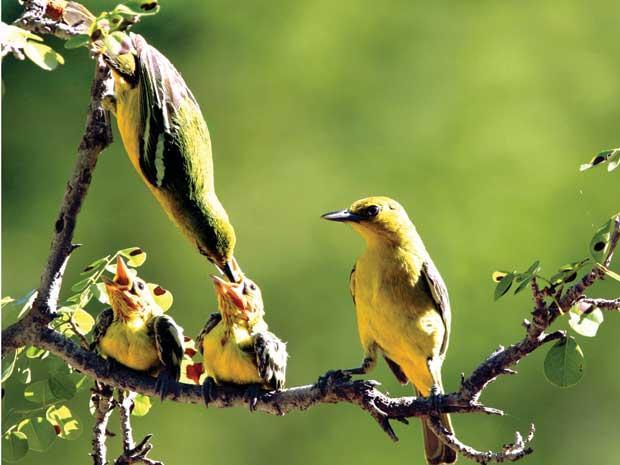 Chim mẹ và đàn con